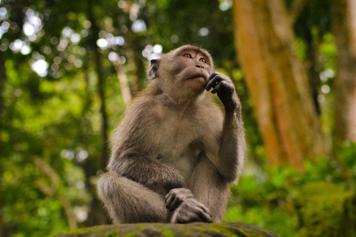 Monkey looking surprised.
